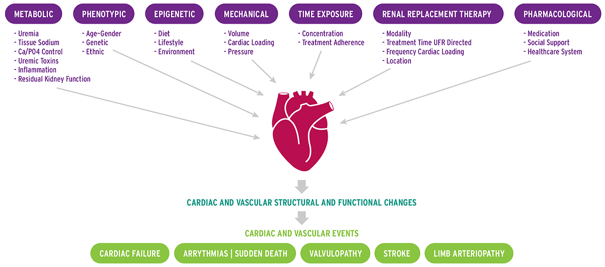 Diagram of pathophysiological mechanisms involved in uremic cardiomyopathy development